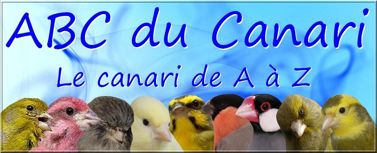 ABC du Canari