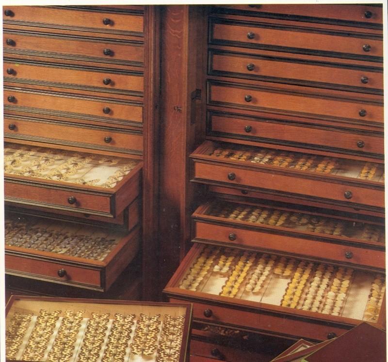 Techniques de collection meuble entomo le monde des for Meuble vitrine pour collection