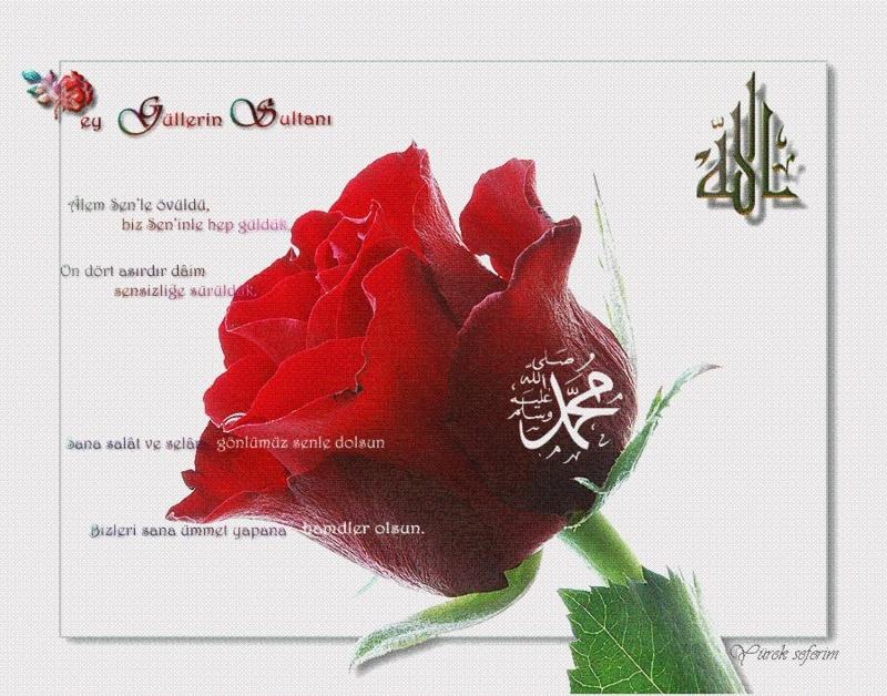 Güllerin en güzeli olan hz muhammed s a v için bir gül de siz