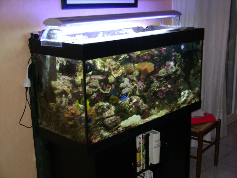 Forum r cifal finist rien afficher le sujet vend for Vend aquarium