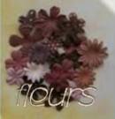 http://i13.servimg.com/u/f13/11/53/24/51/fleurs10.jpg