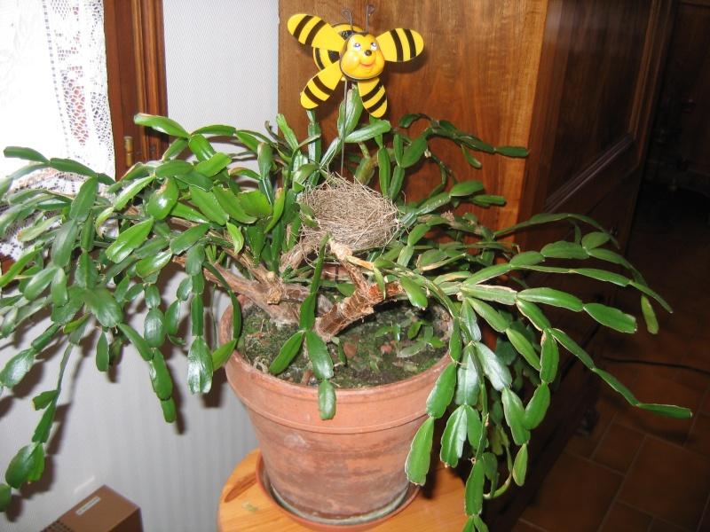 Mes plantes vertes for Grandes plantes vertes pas cheres
