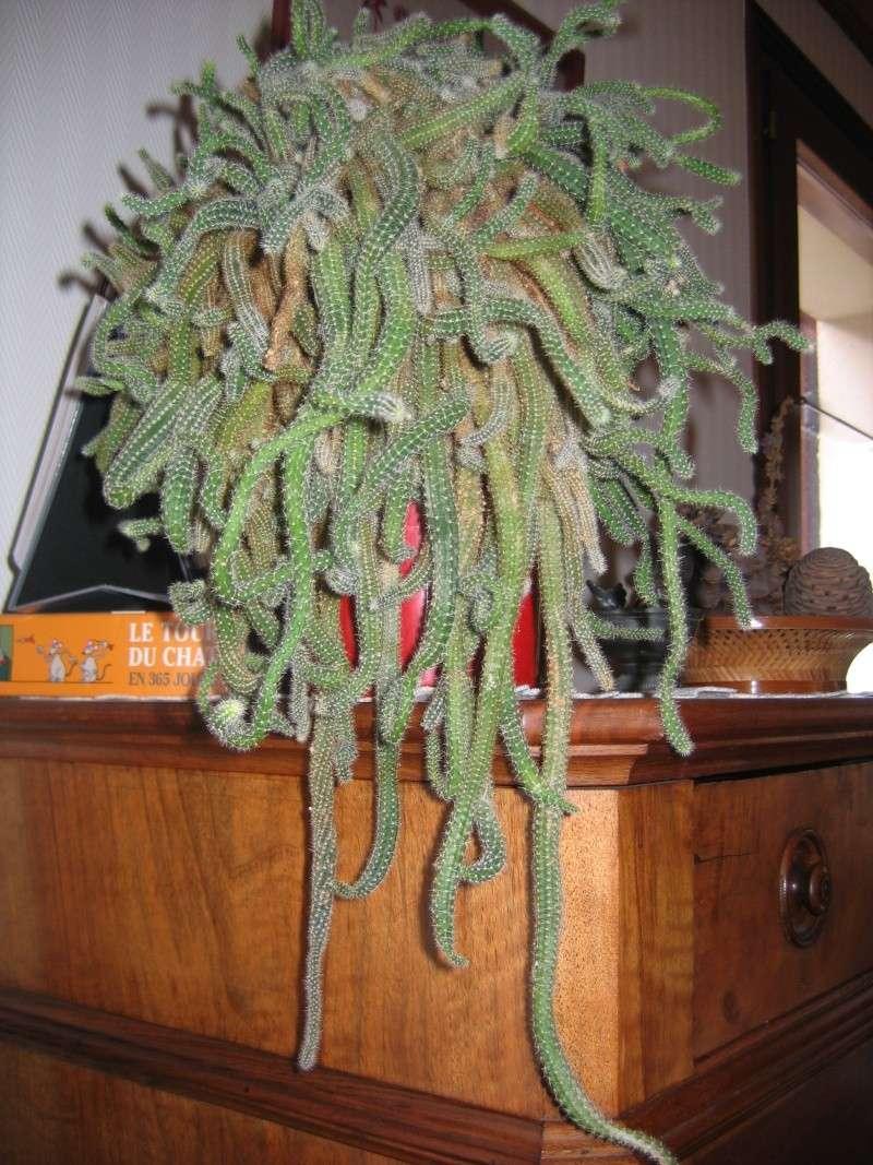 Mes plantes vertes for Plantes vertes hautes