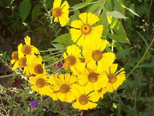 fleurs12.jpg