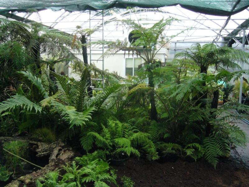Chez jean06 for Vente plantes par correspondance