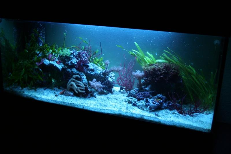 aquarium eau douce eclairage bleu