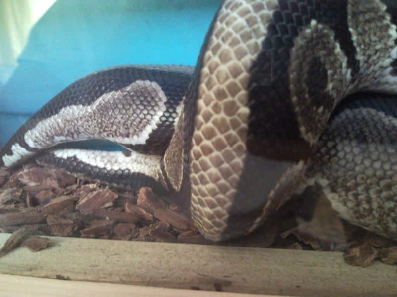 Accouplement Python