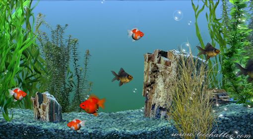 Screensaver et fond ecran for Fond ecran gratuit aquarium