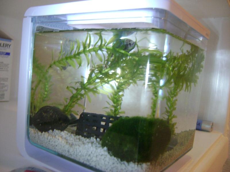 Aquarium 2 l et bien tre de mon betta page 2 for Kit bac a poisson